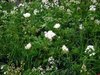 telegraph-garden-c