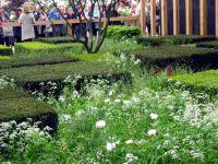 telegraph-garden-e