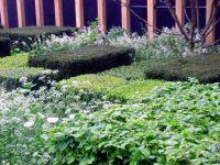 telegraph-garden-f