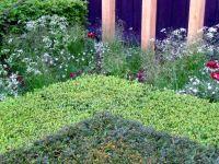telegraph-garden-i